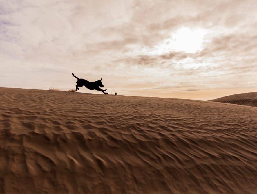 W centrum naszego kraju znajduje się pustynia. Nie, to nie żart ani fatamorgana